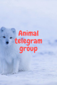animal telegram group